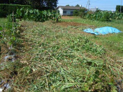 収穫後の畑
